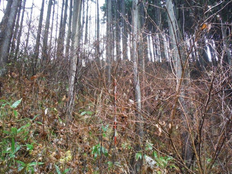 保育間伐-着手前